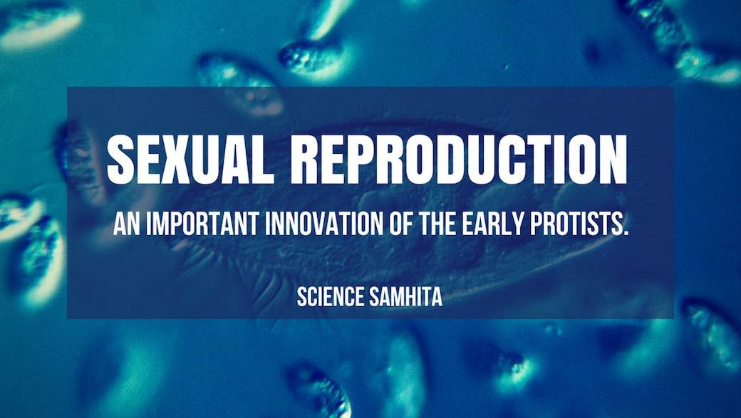 Sexual Reproduction - An Important Innovation of the Early Protists.​